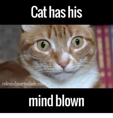 Mindblown Meme - colean cat has his mind blown cats meme on sizzle
