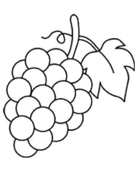 grapes coloring page grapes coloring page sketch coloring page