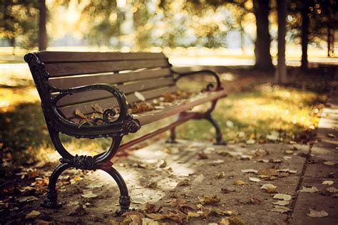 autumn park bench bench bench shop shop leaves dry autumn park tree nature