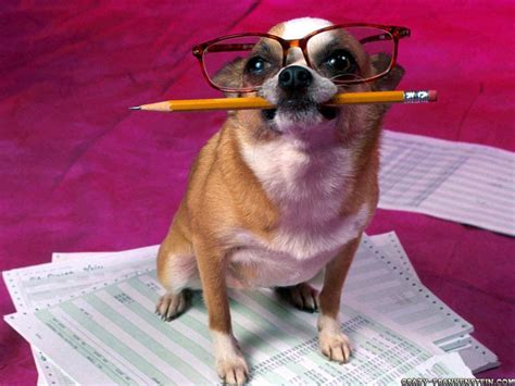 Accountant Dog Meme - 1000 images about funny animals on pinterest