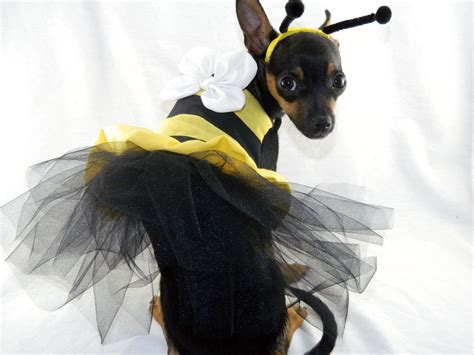 bumble bee costume for dogs bumble bee costume with headband xxs m beds and costumes
