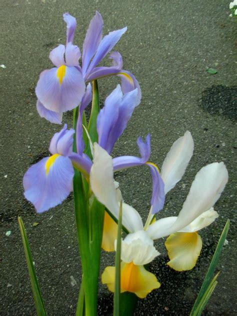dizionario dei fiori novaflor rosita dizionario dei fiori