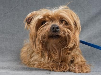 adoption colorado springs 558 best adopt a puppy mill rescue images on animal rescue houses and