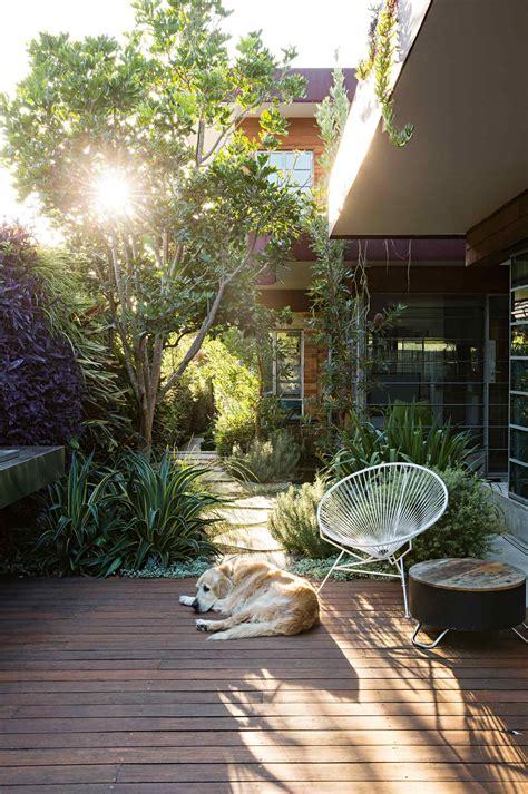 deck dog courtyard garden peter fudge july courtyard