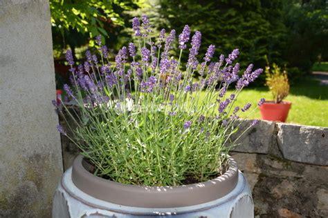 Ordinaire Plante Pour Jardiniere Balcon #1: pot-lavandes-terrasse.jpg