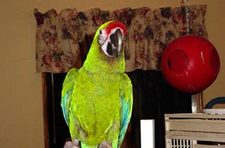 emerald parrot rescue cincinnati oh 513 625 6119