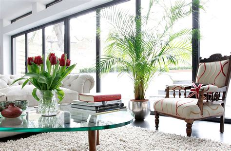 home decor with indoor plants best indoor house plants trees enliven your indoors