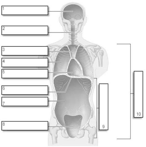 cavities diagram quiz hst gt gongora gt flashcards gt planes directions and