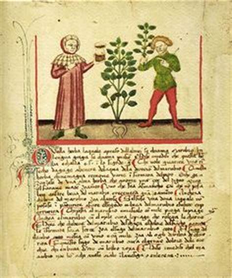 herbalist testo 1000 images about herbalism on