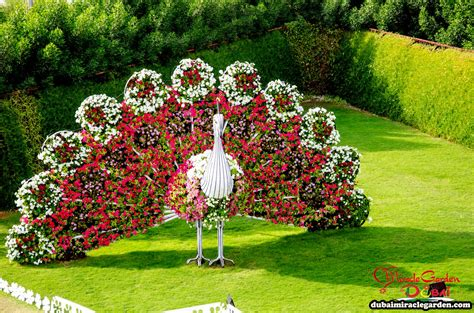 Dubai Miracle Garden The World S Biggest Natural Flower Flower Garden In The World