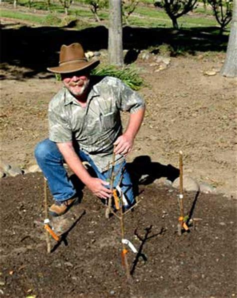 multi planting dave wilson nursery