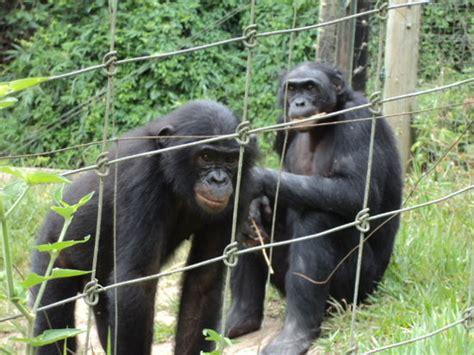 Lola ya Bonobo - Kinshasa - Les avis sur Lola ya Bonobo ...