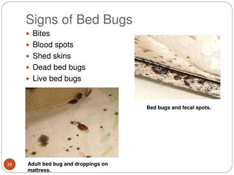 photos of signs of bed bugs ppt integrated pest management cockroaches bed bugs