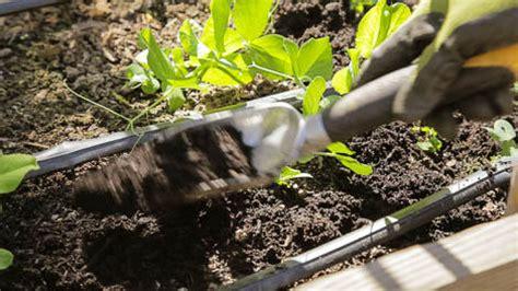 organic mulch for vegetable garden mulch in your vegetable garden beyond the basics organic