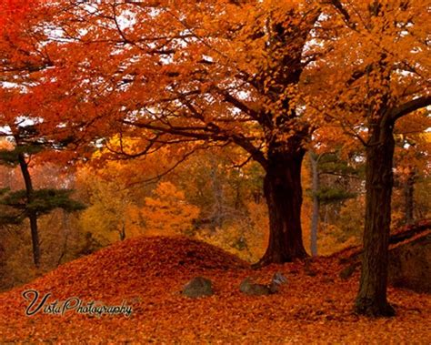 img_0509: jeff foliage: galleries: digital photography