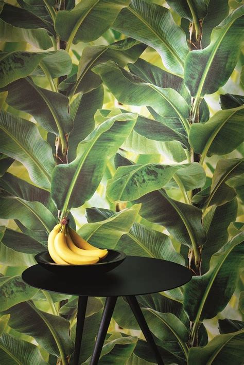 banana palm wallpaper australia palm forest is one of the new designs in our albany