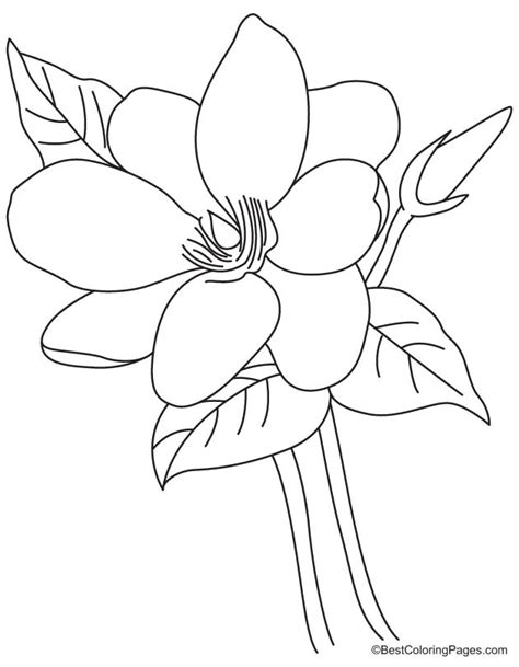 coloring pages of magnolia flowers magnolia flower coloring page free magnolia