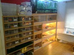 room of 1000 snakes 1000 images about snake room on reptile room snakes and reptiles