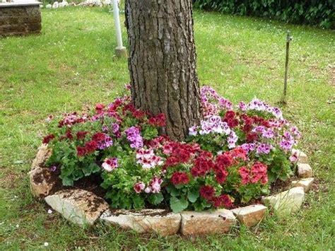 creare un aiuola fiorita creare una aiuola sotto l albero 20 esempi