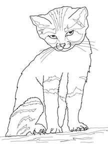 cat color free printable cat coloring pages for