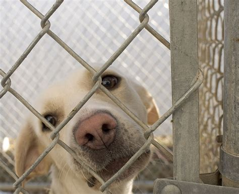 animal shelter dogs animal shelter