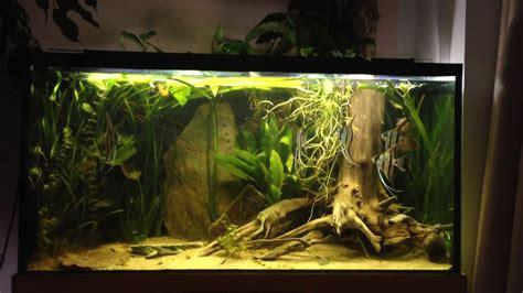 Aquarium Mit Wurzeln Einrichten 6735 by Muss Die Wurzel Raus