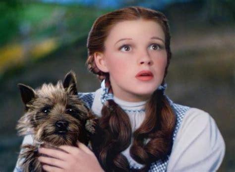 toto breed os 20 cachorros mais famosos do cinema pausa dram 225 tica