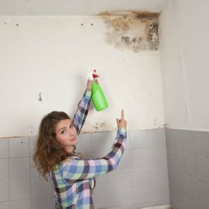 muffa in casa muffa in casa rimozione a carico dell inquilino o