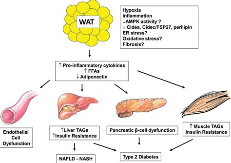 healthy fats pubmed adipose tissue inflammation and insulin resistance all