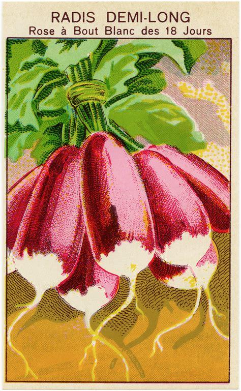 french radish vintage seed packet label  design shop blog