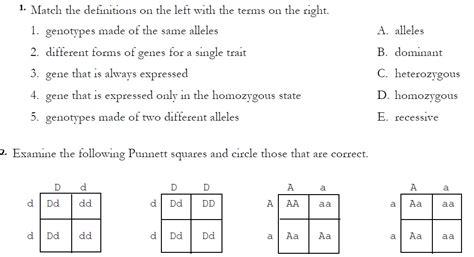 Monohybrid Cross Worksheet Answers by Monohybrid Crosses Drm4sciencegrinds
