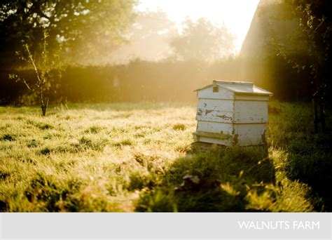 top 28 bee house location adding bee insect habitat to