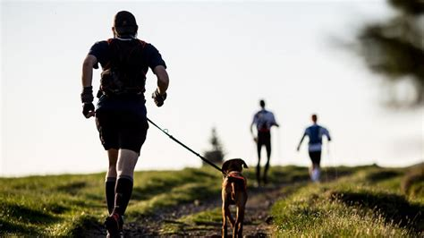 running with dogs 9 tips for running with your
