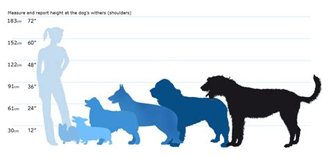 puppy size breeds help a friend would suggestions on puppy breed adoption advice for