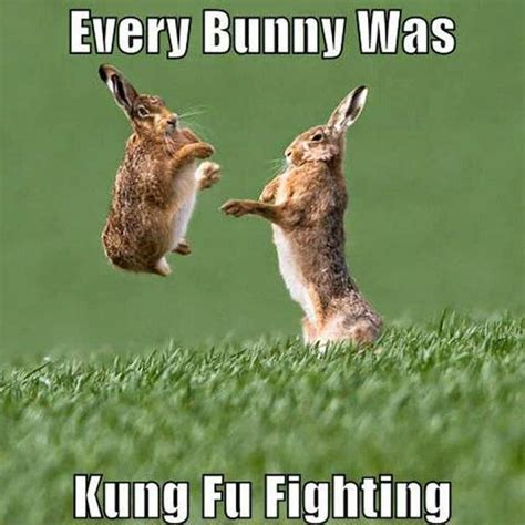 Funny Fighting Memes - 25 very funny rabbit pictures