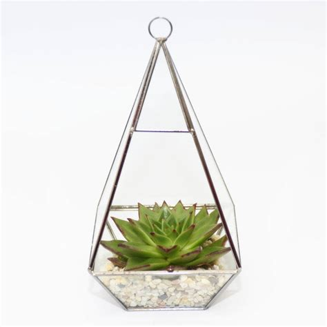 Terrarium Vases by Pyramid Shaped Glass Vase Succulent Terrarium By Dingading