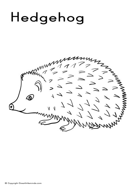 hedgehog coloring pages hedgehog coloring picture