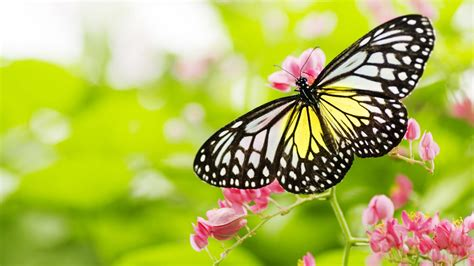 the butterfly the butterfly and flower relaxing piano music hd 1080p youtube