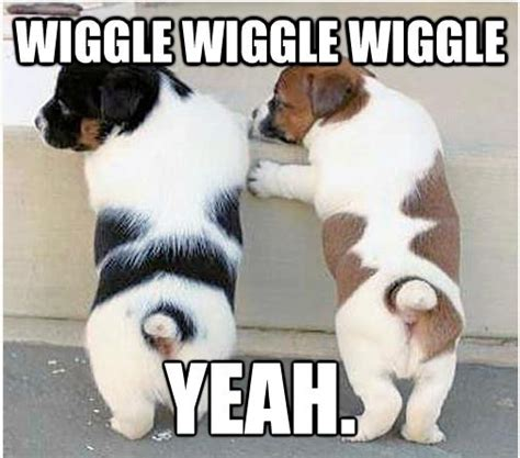 Cute Pet Memes - 7 days 7 dogs you ll laugh promise