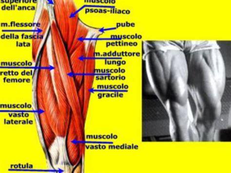 alimenti fanno dimagrire le cosce dieta per i muscoli delle gambe come dimagrire nelle
