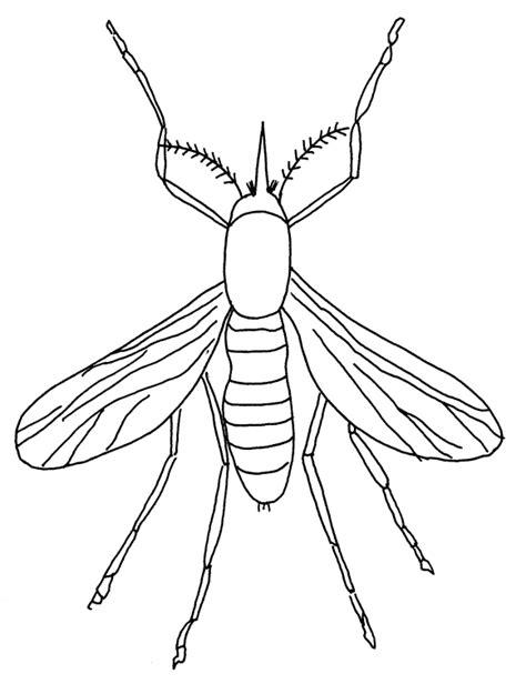 Free Animal Mosquito Printable Coloring Books Mosquito Coloring Page