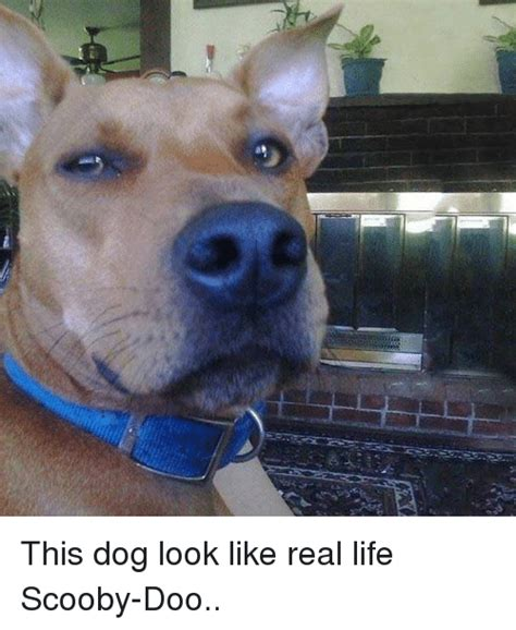 puppy that looks real 25 best memes about dogs and dogs and memes