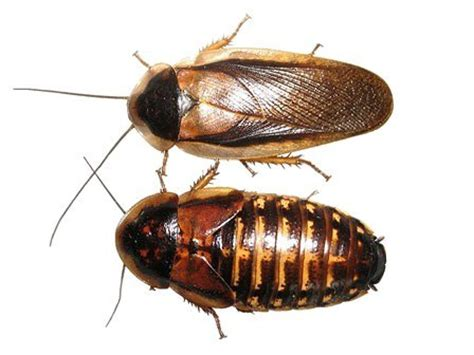 Best Places To Buy Bedding Roaches For Pets Learn Why Roaches Are An Amazing