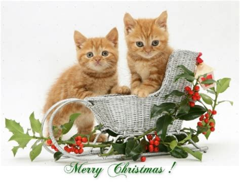 images of merry christmas kittens merry christmas christmas cats and dogs wallpapers and