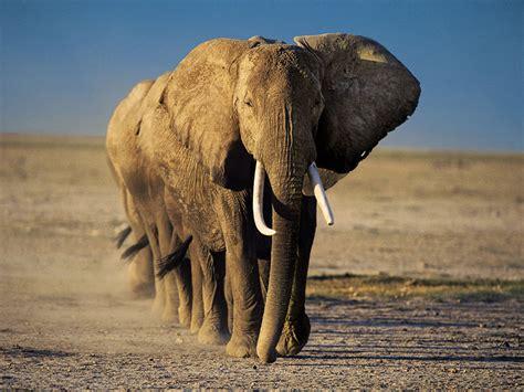 elephant wallpaper pinterest elephant hd wallpaper high quality wallpaper elephant