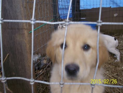 puppies for adoption in alabama pin alabama rescue on