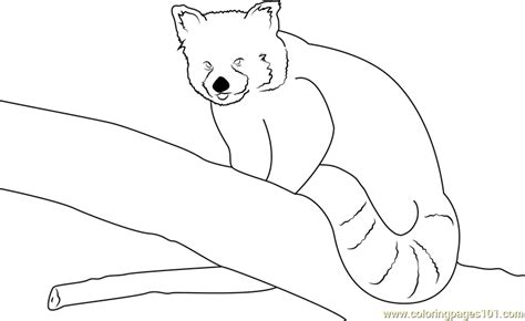 red panda by neomys coloring page free red panda