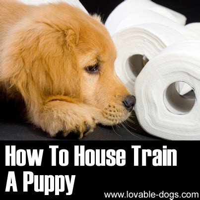 how to house train a dog lovable dogs how to house train a puppy video tutorial lovable dogs