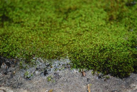 how many types of mosses are there a day at the moss and gardens