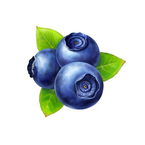 blueberry clipart royalty free blueberries clip vector images